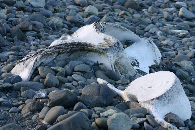 Steupert: Urlaub - Chil. Fjorde & Antarktis 30.12.2003 ...